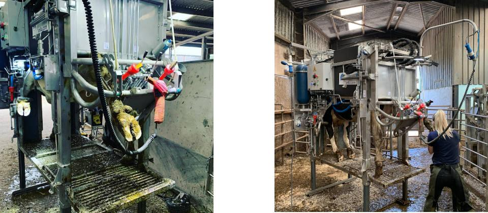 Image of Scenes from a busy day of hoof trimming on a Monmouthshire farm