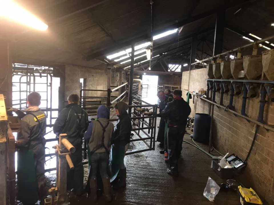 Image of Cattle Foot Trimming Trainees on Our Courses