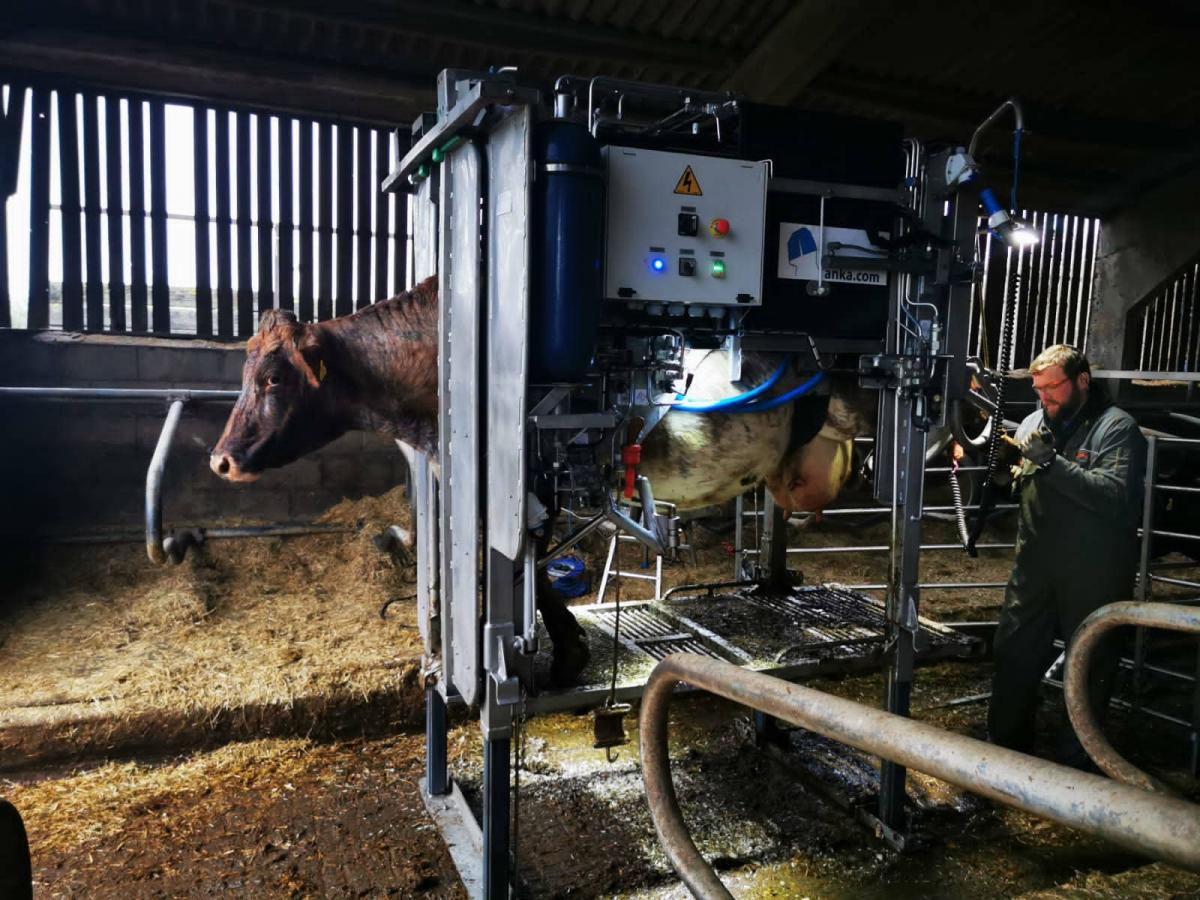Image of Another day in the life of a Wales and South West Hoof Trimmer